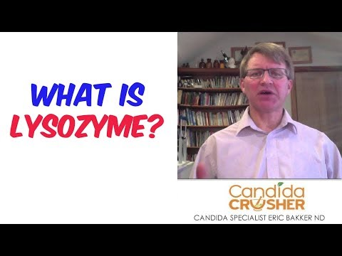 What Is Lysozyme?