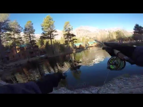 Fly fishing a small pond for huge rainbow trout!