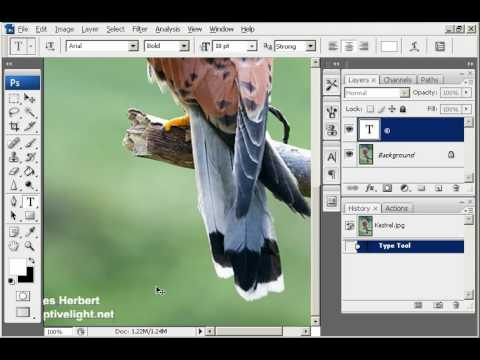 Adding a Copyright Watermark in Photoshop