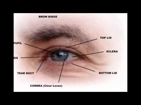 Outer Parts Of The Eye