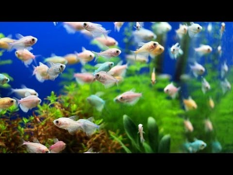 Why Fish Tank Still Smells after Cleanup   Aquarium Care