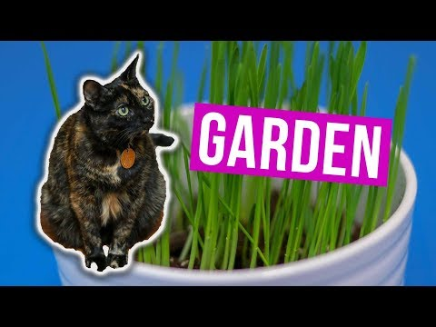Growing a Cat Grass Garden Indoors 🌱 for My Gato 🐈 JEN TALKS FOREVER