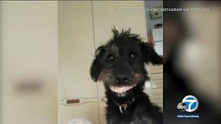 Dog breaks into bedroom drawer and steals dentures | ABC7
