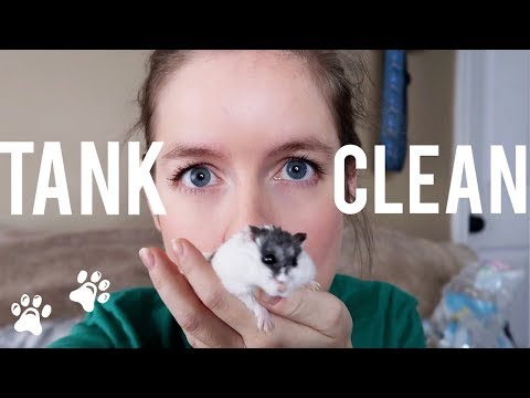 Cleaning Moo's Hamster Tank