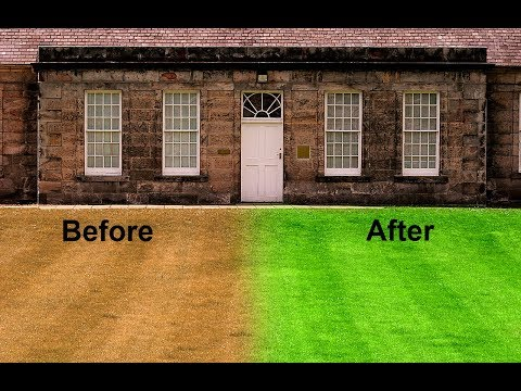 How to Make Dry Grass Lush Green Grass in Photoshop