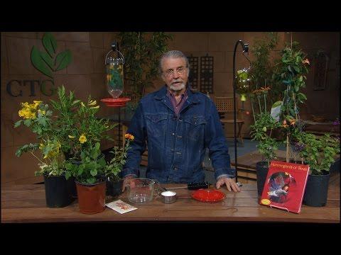 How clean hummingbird feeders |John Dromgoole |Central Texas Gardener