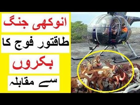 A Country's Army VS  Goats - Anokhi Tareen Jung
