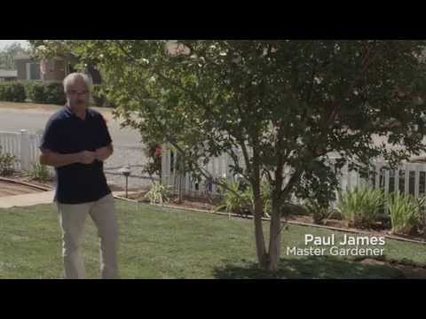 Installing a Subsurface Drip Irrigation System in Turf Grass