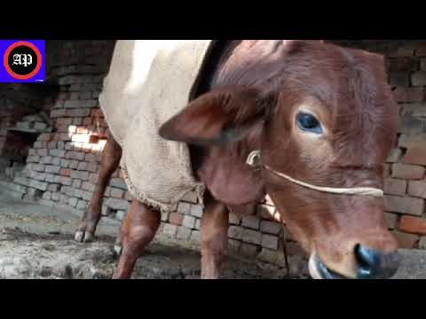 how to start a dairy farm business in india