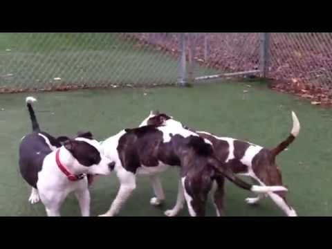Donnelly, Xena and Orson - a trio of beautiful dogs!