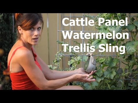 How to Make a Cattle Panel Watermelon Trellis Sling
