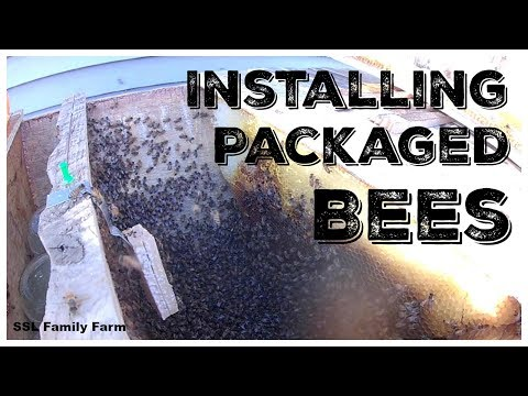 Installing a Package of Bees in a Top Bar Hive