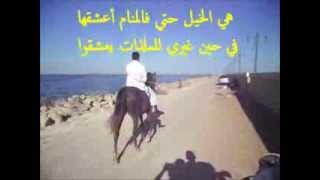 #x202b;خيول الحرابي بالفيوم (الريحانه) الخيل العربي الأصيل عالأصل دور#x202c;lrm;