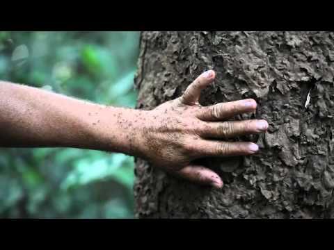 Hiking through the Brazilian Amazon jungle