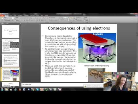 Scanning Electron Microscopy (SEM) Basics