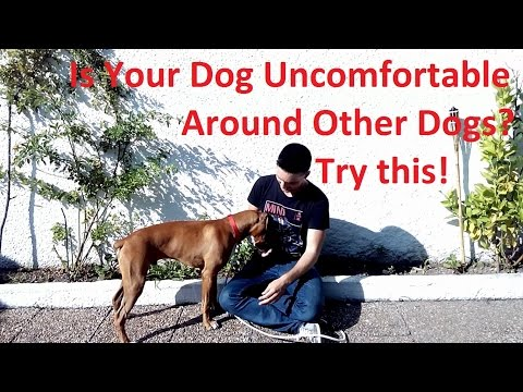 How to Train Your Dog to Be More Comfortable With Other Dogs