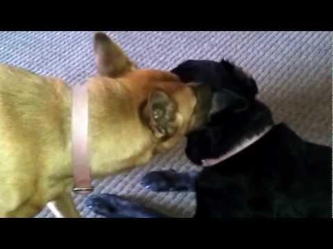 Dog Gets an Ear Job