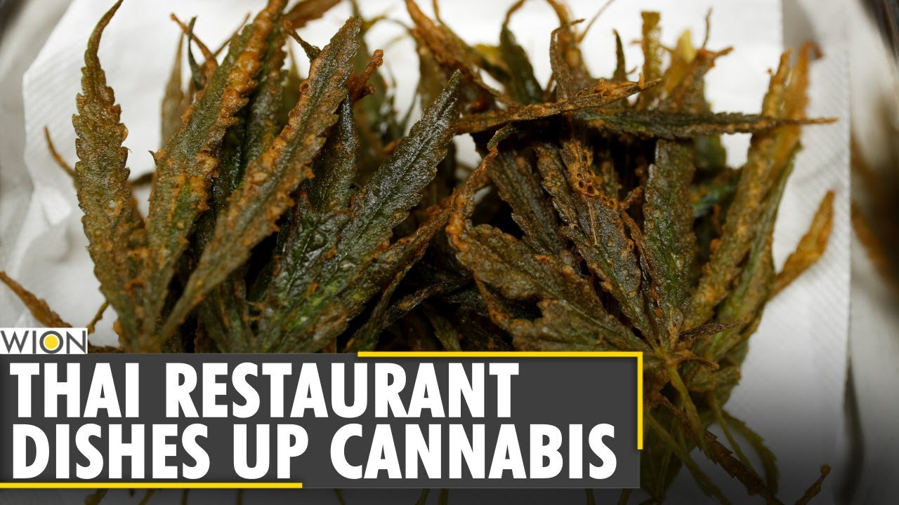 Thailand serves up cannabis cuisine to happy customers | World News | WION News