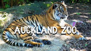Auckland Zoo // New Zealand