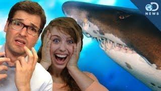 Shark Week 2013!