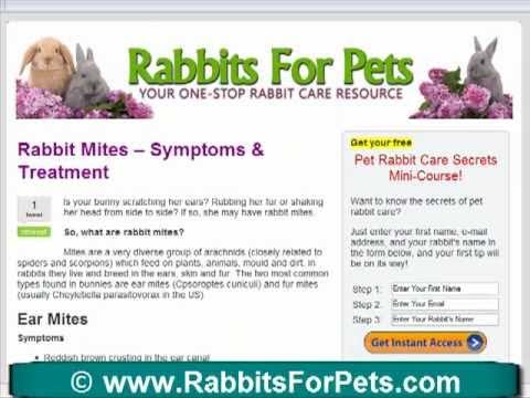 Rabbit Mites - Treatment for Pesky Rabbit Mites