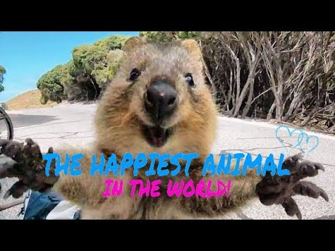 MEET THE HAPPIEST ANIMAL IN THE WORLD!