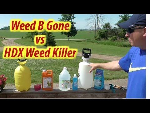 Weed Killer Challenge: Vinegar 'Weed B Gone' vs HDX