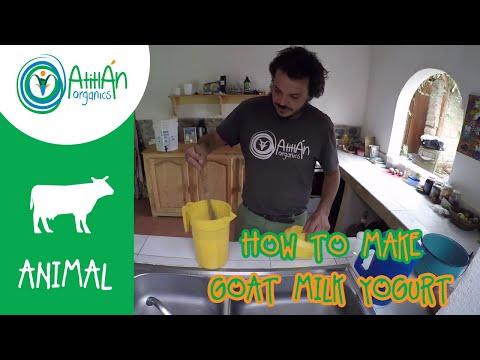 How to Make Goat Milk Yogurt