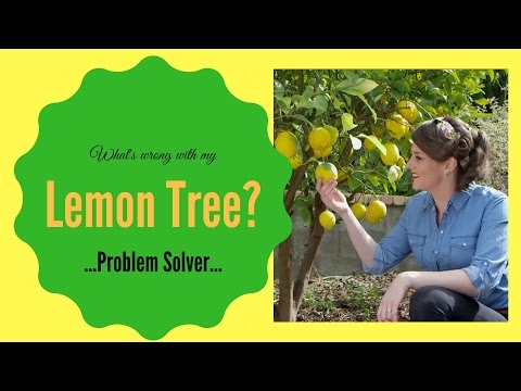 What's wrong with my lemon tree? // Lemon Tree Diseases & Problem Solver // The Gardenettes