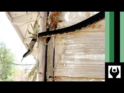 SNAKE!!! Water Porch and Chimney Work on Home Makercise