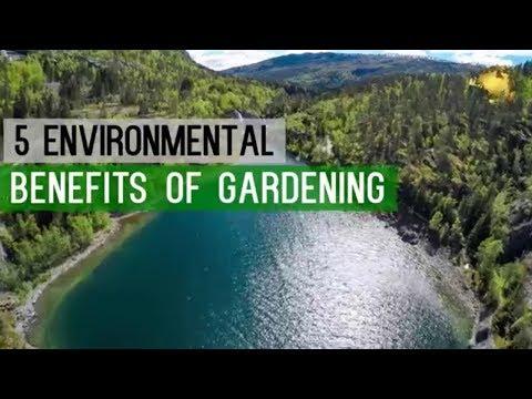 HAPPY World Environment Day (WED) | GARDENING Benefits - GO GREEN - Save Earth - Start Gardening!