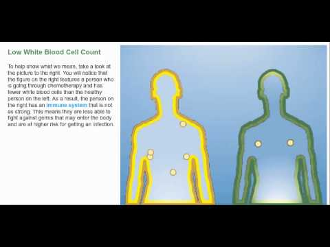 Understanding the Effects of Low White Blood Cell Count