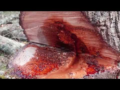 A Bleeding Tree