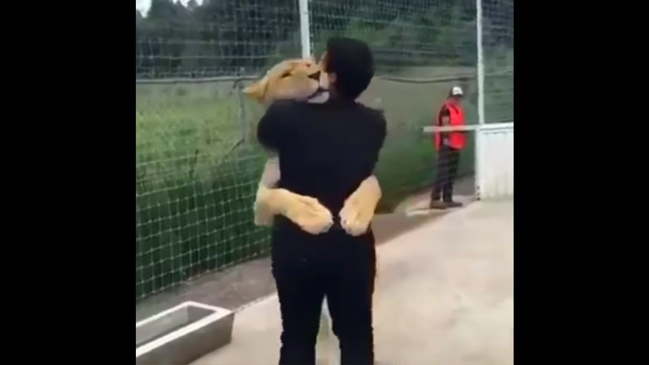 Lion Sees His Adoptive Dad After 10 Years... (SHOCKING)