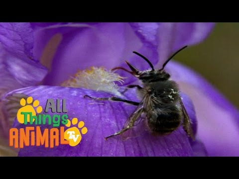 BEES | Animals for children. Kids videos. Kindergarten | Preschool learning