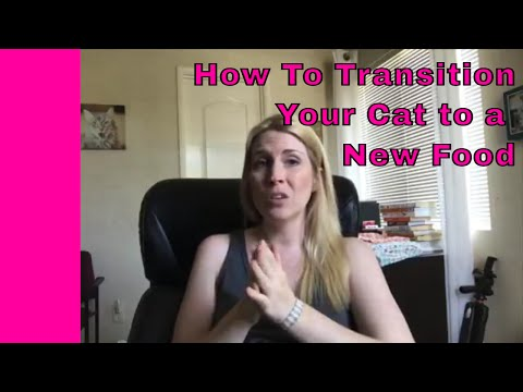 How To Transition Your Cat To A New Food