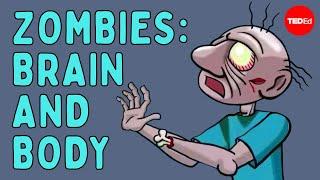 Diagnosing a zombie: Brain and body (Part one) - Tim Verstynen & Bradley Voytek