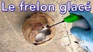 Bombe de froid sur nid de frelons asiatiques test