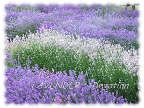 Language Of Flowers.wmv