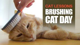 Brushing Cat Day
