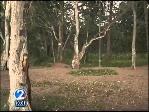 City council discusses plans for noni farm