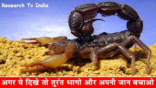 Download दुनिया के सबसे जहरीले बिच्छू| Most Poisonous and Dangerous Scorpion in the World|Scorpions|Rahasya Video
