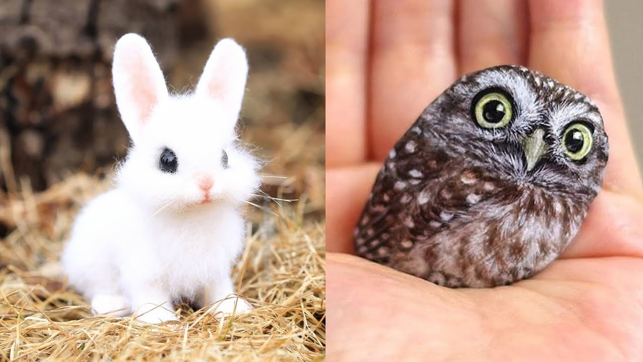 Cute baby animals Videos Compilation cute moment of the animals - Cutest Animals #12