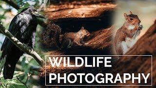 Wildlife Lenses   Throwback Thursday