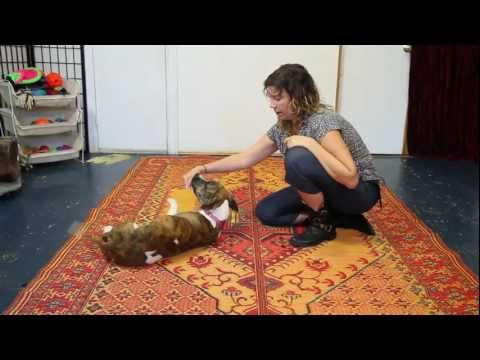 Teach Your Dog to Roll Over - Dog Training