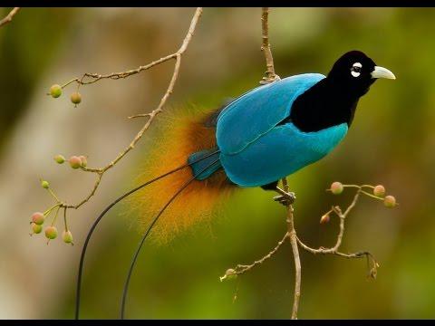 Xxx Mp4 World 39 S Most Beautiful And Calm Bird दुनिया की सबसे सुंदर और शांत चिड़िया 3gp Sex