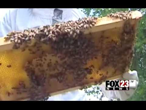 Landfill Bees Produce Honey - American Waste Control - FOX 23