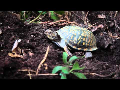 How You Can Help Turtles Hibernate