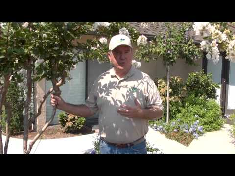 Bayer systemic plant and tree treatment review