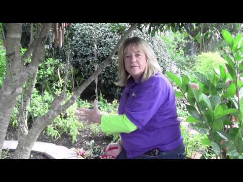 How to Prune Shrubs and Trees
